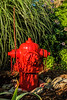 Freshly painted fire hydrant