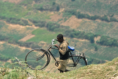 Transporting his transportation near Nteko village, Uganda.