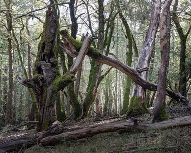 Forest Mayhem