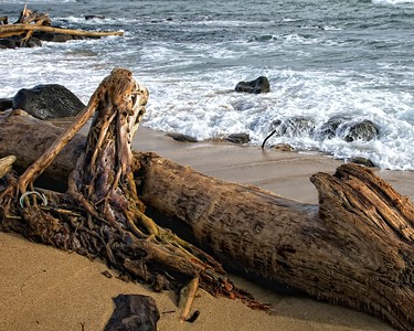 Gnarly Driftwood