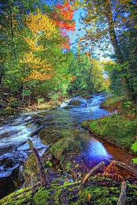Little Carp River 1