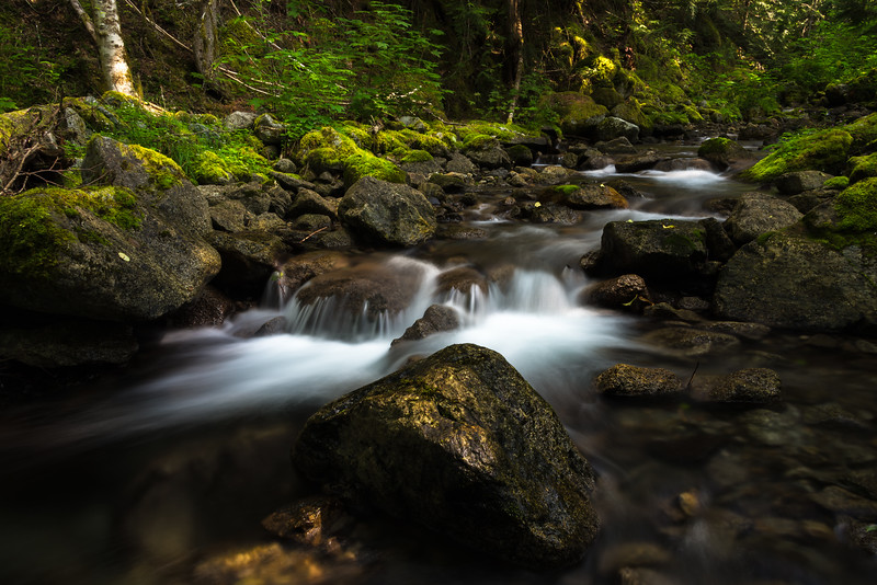 Early Morning Mountain Stream