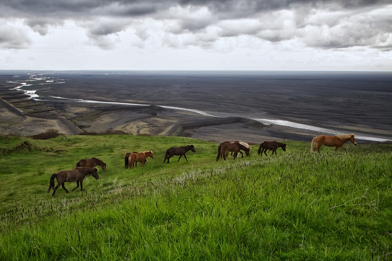 Pasture at the Edge of the World