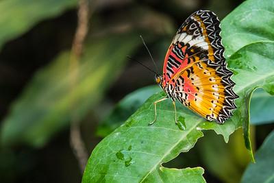 Butterfly farm, Siem Reap, Cambodia
