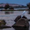Egret, Nile River, Egypt