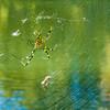 Spider, Kanazawa, Japan