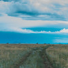 Elk on the Horizon, Horse Mesa, New Mexico