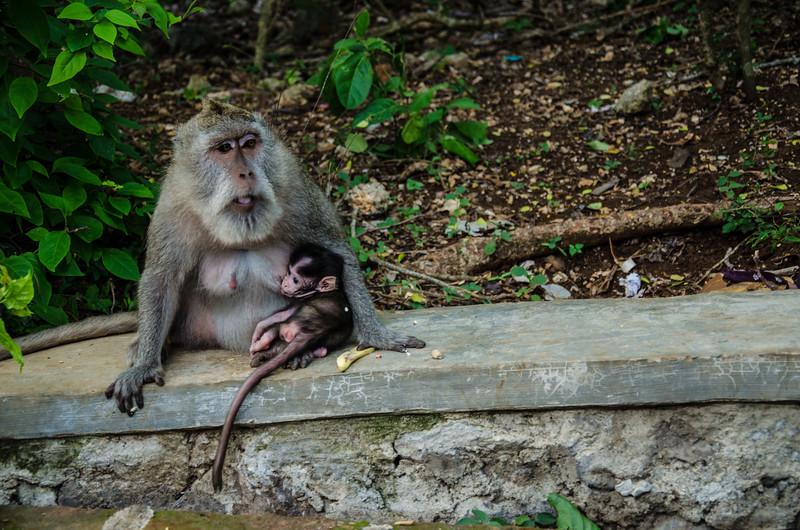 Monkeys, Ubud, Bali