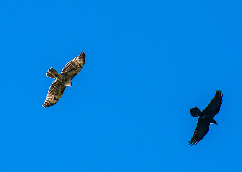Hawk and Raven, New Mexico