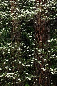 Yosemite Valley 2005