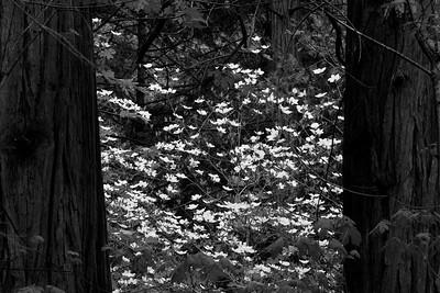 Yosemite Valley 2009