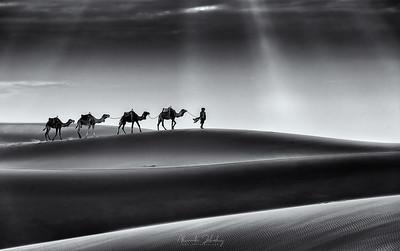 Sun of the Desert