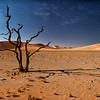 The Trees of Namib