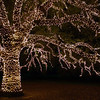 Christmas light decorations in Houston, USA