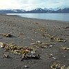 Beach along the north side of the Van Keulenfjorden, Svalbard