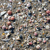Colorful shells at Qurum beach, Oman