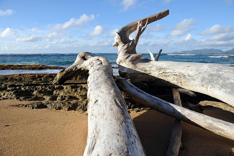 Washed up logs on Kauai beach, Hawaii