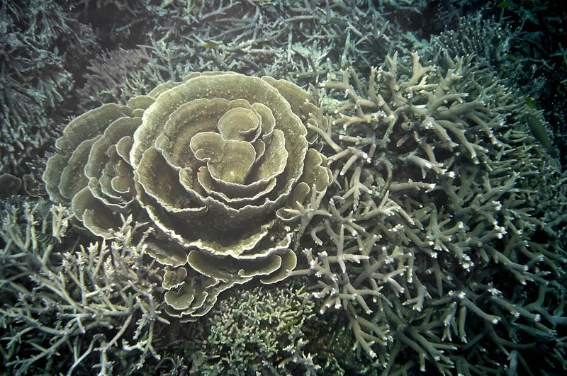 Coral reef near Tioman island, Malaysia