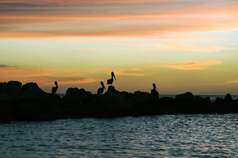 Pelican silhouettes after sunset, Curaçao