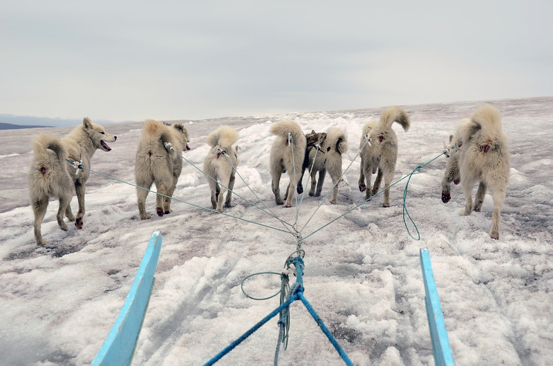 Dog sledding on the Lyngmark glacier on Disko Island, west Greenland