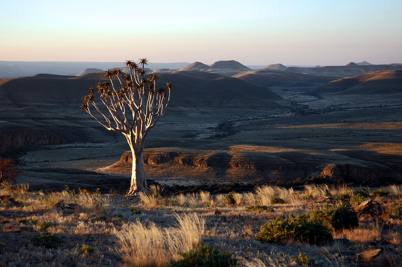 Solitary quivertree in Zaris Mountains, Namibia