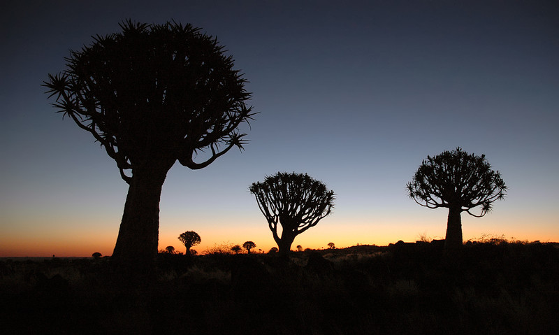 Dusk at quivertree forest near Keetmanshoop, Namibia
