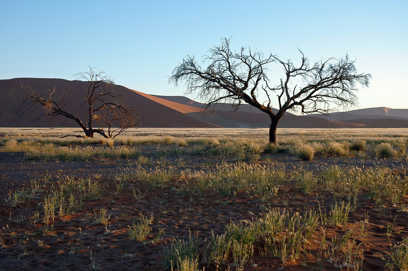 Dead trees in the Sossusvlei area, Namibia