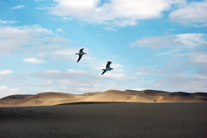 Seagulls over sand dunes along the Skeleton Coast, Namibia