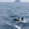Dolphins near Panarea, Eolian Islands, Italy