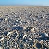 Shell-rich sabkha near Barr Al Hikman, eastern Oman