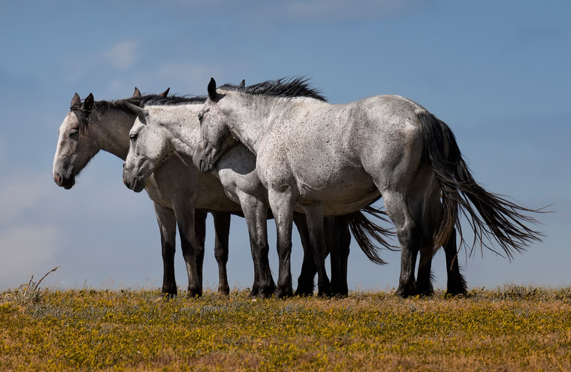 Horses in the South Unit of the Park