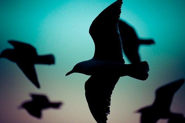 Not a huge fan of bird photos, it's never been a genre that interests me (no offence intended to bird photographers - we all have genre's we like and don't like).<br /> <br /> This one appealed to me for some odd reason so I decided to include it.