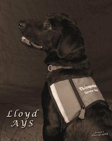 Lloyd AYS