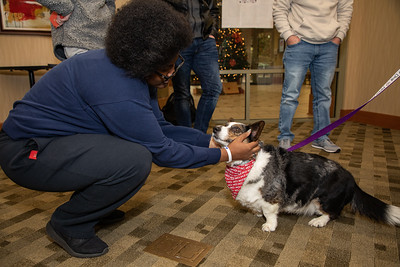 TherapyDogs-9274
