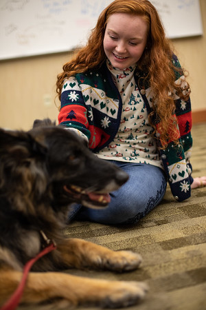 TherapyDogs-9377