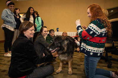 TherapyDogs-9328
