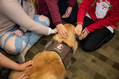 Therapy Dogs Sassy-7128