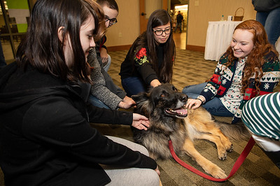 TherapyDogs-9337