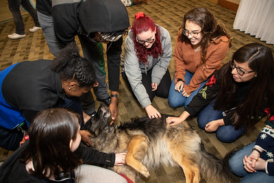 TherapyDogs-9349