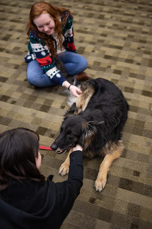 TherapyDogs-9401
