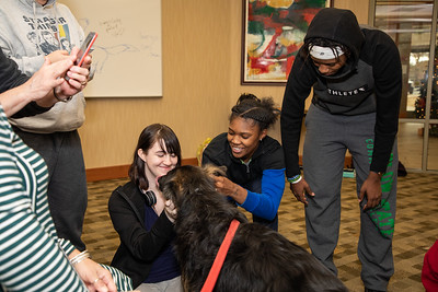 TherapyDogs-9354