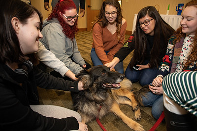TherapyDogs-9347