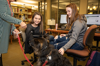 TherapyDogs-9446