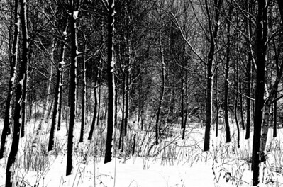 The Small Woodland