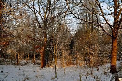 Sun-struck Trees