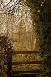 Style into Woodland