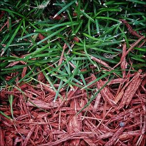 Red cedar mulch + grass