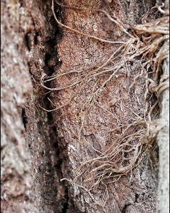 Tree bark + viney overgrowth