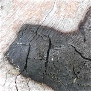 Fire-charred driftwood