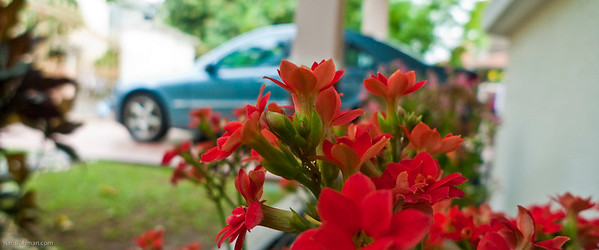Irfan loved these red flowers